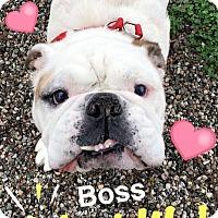 Adopt A Pet :: Boss - Santa Ana, CA