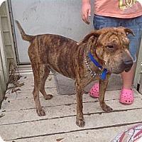 Adopt A Pet :: Juno - ....., FL
