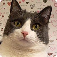 Adopt A Pet :: Nilla - Albany, NY