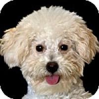 Adopt A Pet :: Kiki - La Costa, CA