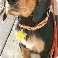Adopt A Pet :: Rich - San Diego, CA