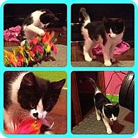 Adopt A Pet :: Lander - Modesto, CA