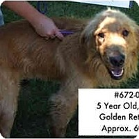 Adopt A Pet :: I.D. # 672-08 - RESCUED! - Zanesville, OH