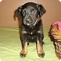 Adopt A Pet :: Sox - Saskatoon, SK