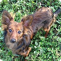 Adopt A Pet :: RALPHIE - Loxahatchee, FL