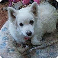 Adopt A Pet :: Carly - Saskatoon, SK