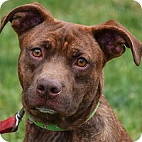 Adopt A Pet :: Garth - Huntley, IL
