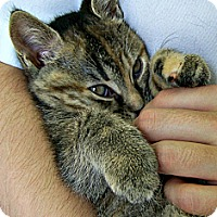 Adopt A Pet :: Missy - Toledo, OH