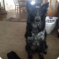 Adopt A Pet :: Willow - Midwest (WI, IL, MN), WI