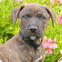 Adopt A Pet :: Tanner von Tasha - Thousand Oaks, CA