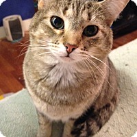 Adopt A Pet :: Taylor - Morganton, NC
