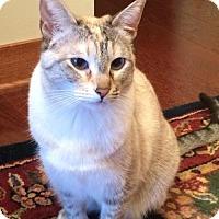 Adopt A Pet :: Chiclet - Minneapolis, MN