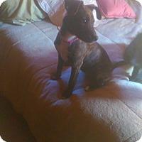 Adopt A Pet :: Hope - Charlestown, RI