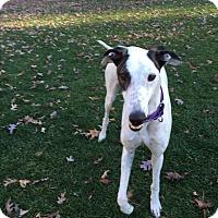 Adopt A Pet :: Octane - Swanzey, NH