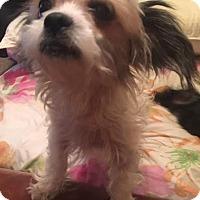 Adopt A Pet :: Pompei Adoption pending - Manchester, CT