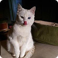 Adopt A Pet :: Snow - Broomall, PA