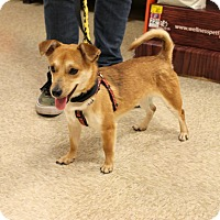 Adopt A Pet :: Bart - Yuba City, CA