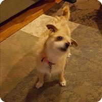 Adopt A Pet :: Jasmine - Homewood, AL