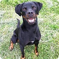 Adopt A Pet :: Zeus - Hendersonville, NC