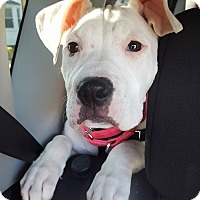 Adopt A Pet :: Lita - North Olmsted, OH