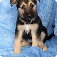 Adopt A Pet :: Sally Gsmix - St. Louis, MO