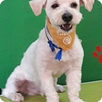 Adopt A Pet :: Billy - San Diego, CA