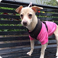 Adopt A Pet :: Frannie - Long Beach, NY
