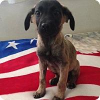 Adopt A Pet :: Devin - Thousand Oaks, CA