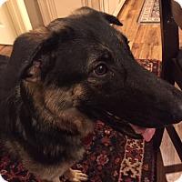 Adopt A Pet :: Venus (Guest) - Roswell, GA