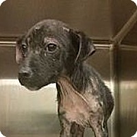Adopt A Pet :: Willie - available 8/27 - Sparta, NJ