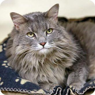 Domestic Longhair Cat for adoption in Kettering, Ohio - Luna Tuna