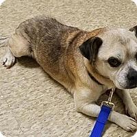 Adopt A Pet :: Brenner - McKinney, TX