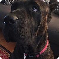 Adopt A Pet :: Jaida - Silver Spring, MD