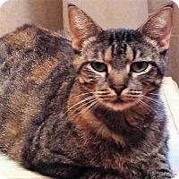 Adopt A Pet :: Tabitha - Athens, GA