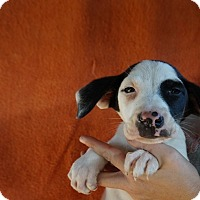 Adopt A Pet :: Rolly - Oviedo, FL