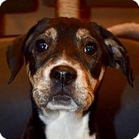 Adopt A Pet :: Jacey - Pembroke, GA