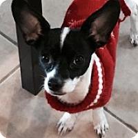 Adopt A Pet :: China - Las Vegas, NV