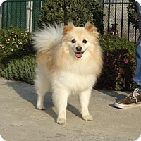 Adopt A Pet :: Peach - Lathrop, CA