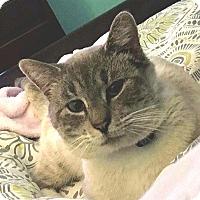 Adopt A Pet :: OSCAR - Winterville, NC