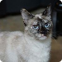 Adopt A Pet :: Ariel - Pittstown, NJ