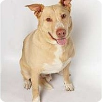 Adopt A Pet :: Ralphie - San Ysidro, CA