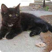 Adopt A Pet :: Bee - Davis, CA