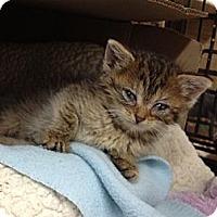 Adopt A Pet :: Dora - Island Park, NY