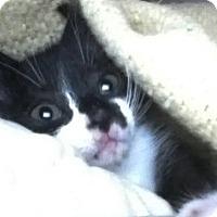 Adopt A Pet :: Cha Cha - Kirkwood, DE