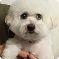 Adopt A Pet :: Princess - Orlando, FL