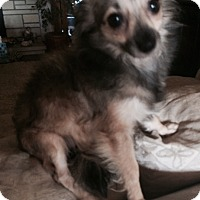 Adopt A Pet :: chachi Pending Adoption - Manchester, CT