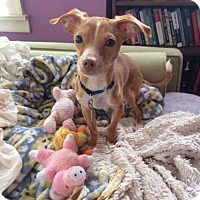 Adopt A Pet :: Noah - Chicago, IL