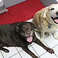 Adopt A Pet :: Jackson & Sandy - Forked River, NJ