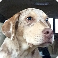 Adopt A Pet :: CHESNEY - smart, handsome - Stamford, CT