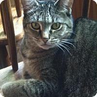 Adopt A Pet :: Princess Sumo - Burlington, WA